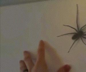 Nie zadzieraj z pająkami