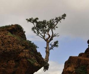 Drzewo na krawędzi