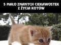 5 rzeczy, których mogłeś nie wiedzieć o kotach