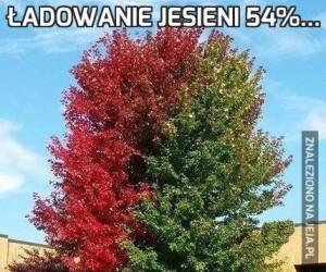 Ładowanie jesieni 54%...