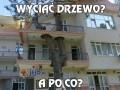 Wyciąć drzewo?