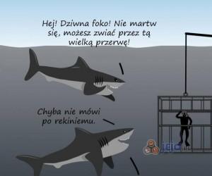 Rekiny są bardzo niezrozumiane