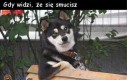 Pies - Mój nowy idol!