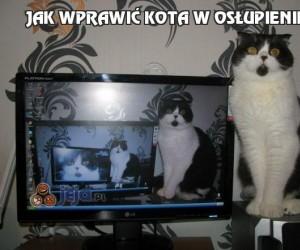 Jak wprawić kota w osłupienie?
