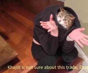 Niepewny Khajiit