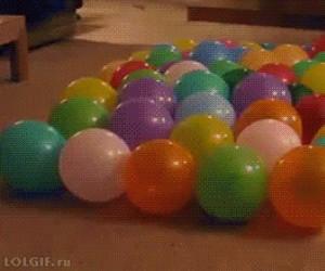 Pies vs balony