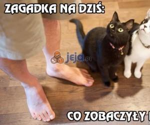 Co zobaczyły koty?