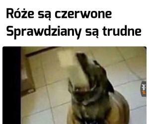 Zdolny psiak