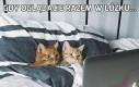 Gdy oglądacie razem w łóżku...