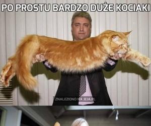 Po prostu bardzo duże kociaki