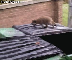 Nie tylko koty mają wpadki przy skokach