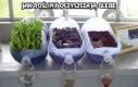Jak rośliny oczyszczają glebę