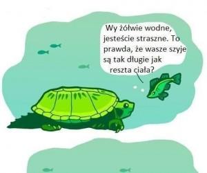 Szyje żółwi wodnych
