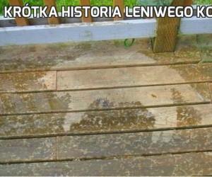 Krótka historia leniwego kota