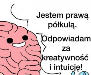 Budowa ludzkiego mózgu