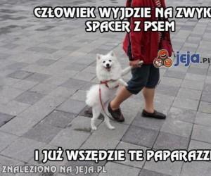 Spacer z psem, też mi coś!