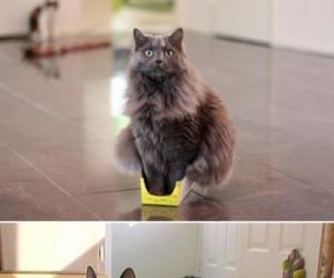 Koty wszędzie wlezą
