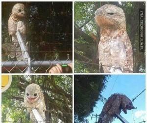 Nocoloty są przerażające