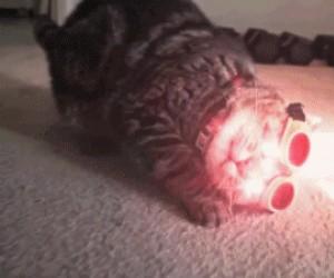 Koty X-menów też są mutantami