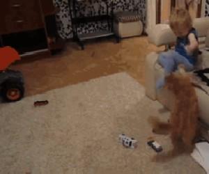 Zabawa z kotem bywa niebezpieczna