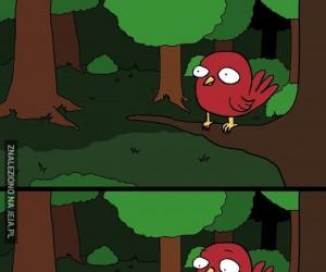 Jaś i Małgosia: nie ufaj leśnym ptaszkom