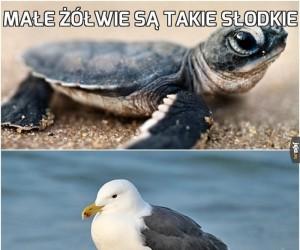 Małe żółwie są takie słodkie