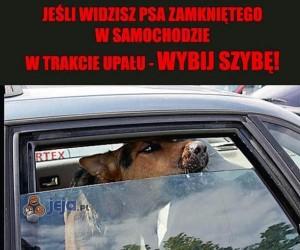 Gdy widzisz psa zamkniętego w samochodzie w ciepły dzień