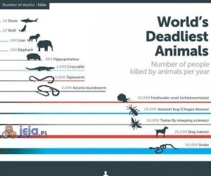 Ilu ludzi rocznie ginie przez zwierzęta