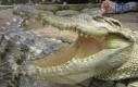 Większość ludzi to krokodyle