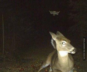 Ucieczka przed latającą wiewiórką