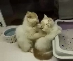O tak, kociaku...