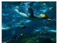 Piękne fotki od National Geographic