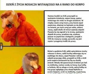 KorpoJanusz