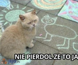 Zdegustowany kot