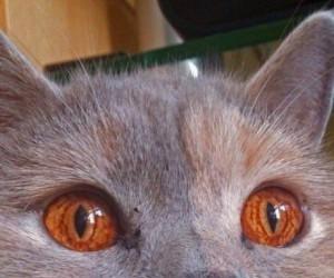 Kot opętany przez Saurona