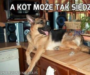 A kot może tak siedzieć!