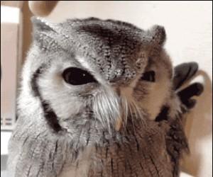 Złowroga sowa