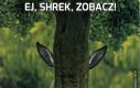 Ej, Shrek, zobacz!