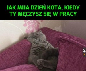 Twój dzień vs dzień kota