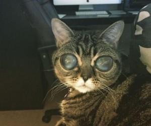 Kosmiczny kot