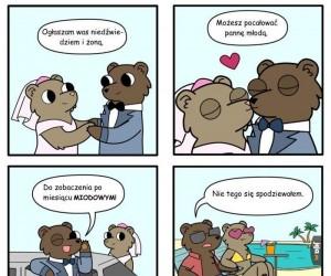 Niedźwiedzie nieporozumienie