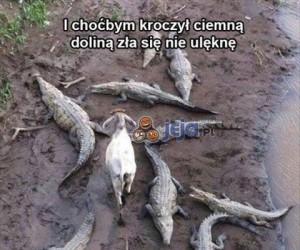 Ta koza ma wiarę