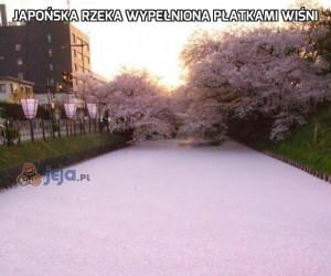 Japońska rzeka wypełniona płatkami wiśni