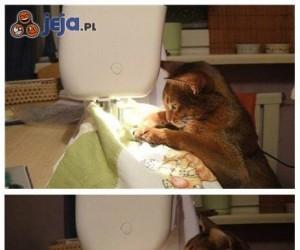 Koci krawiec
