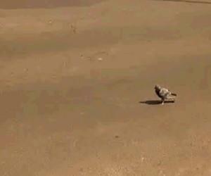 Najdzielniejszy ptak znany ludzkości