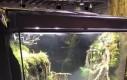 System Dagobah w żabim terrarium