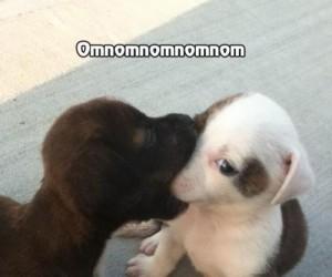 Słodki buziak