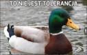 To nie jest tolerancja