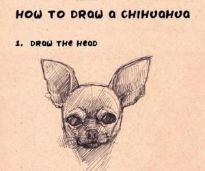 Jak narysować chihuahuę?