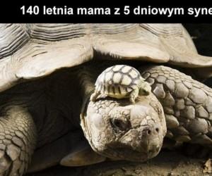 Uroda po mamie